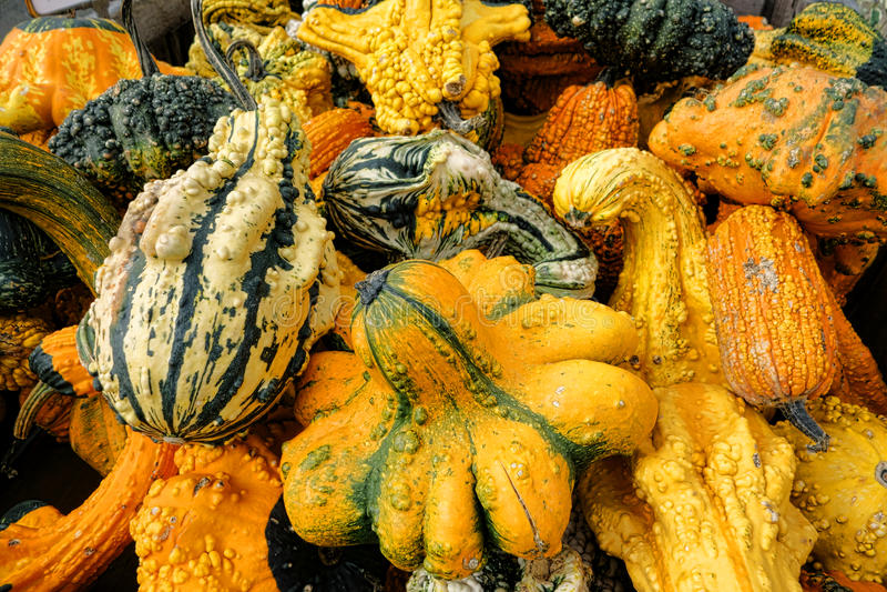 Odd Gourds para Halloween imágenes de archivo libres de regalías