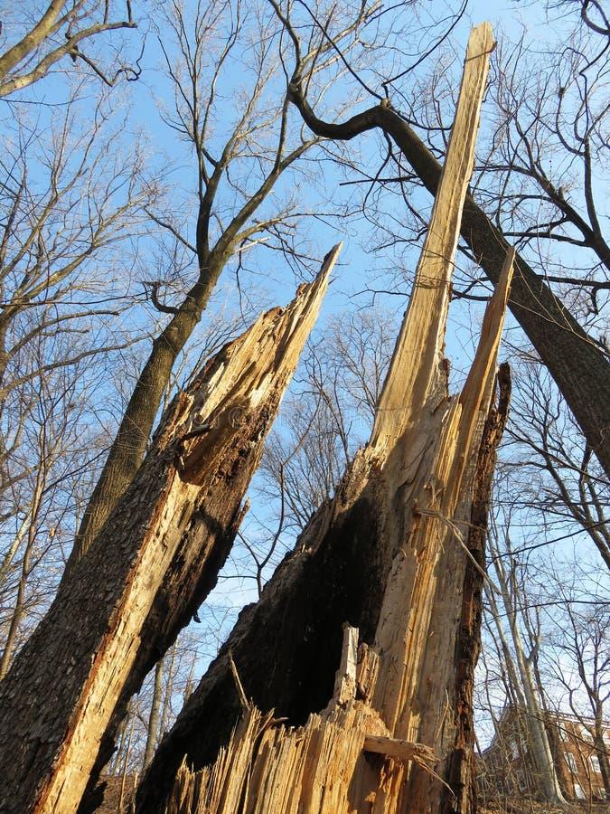 Odd Looking Tree Stump image stock