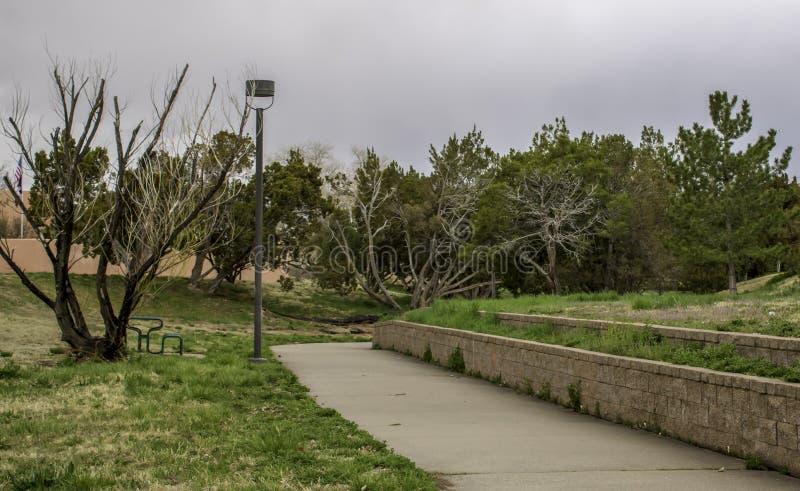 Odd Shaped Trees photographie stock libre de droits