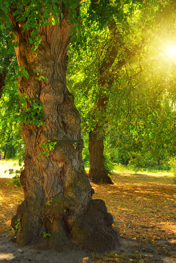Download Odd tree and sun stock image. Image of landscape, branch - 18458815