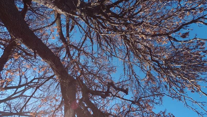 Oddolny veiw drzewo fotografia stock