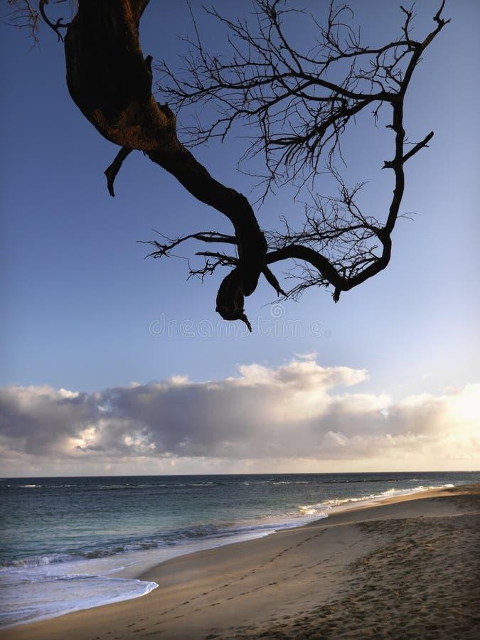 oddział Maui Hawaii plaży obrazy royalty free