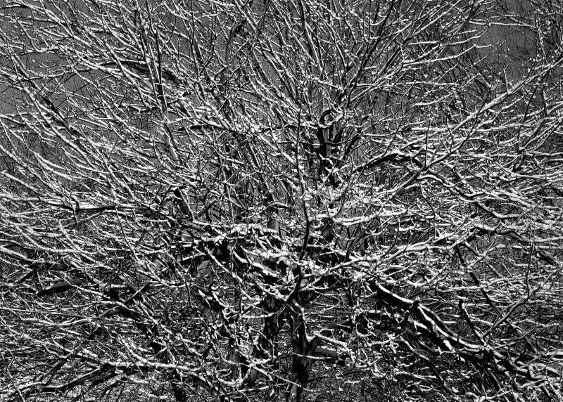 Oddziały śnieg Zdjęcie Royalty Free