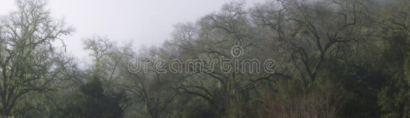 oddziały oak panoramę żywy obrazy royalty free