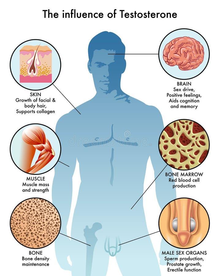 Oddziaływanie testosteron w ciele ilustracji