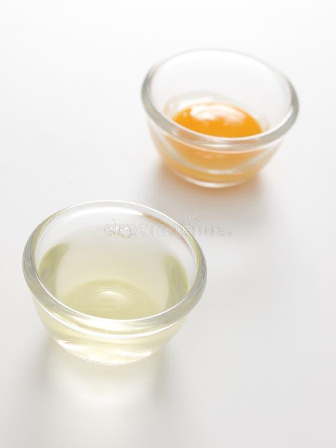 Oddzielony jajeczny biel zdjęcie royalty free