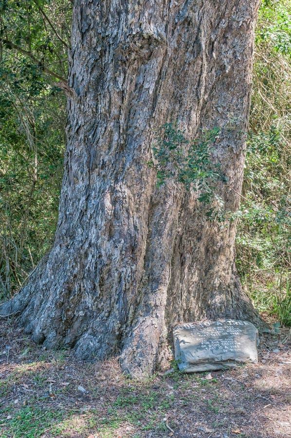 Ode à un arbre images libres de droits