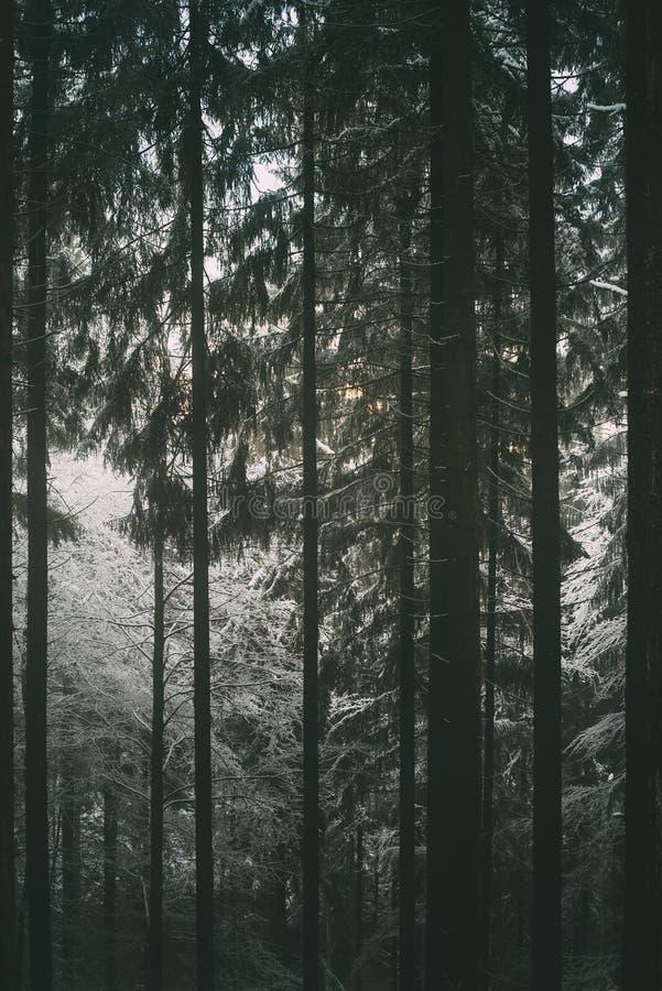 Odenwaldbos in de winter stock foto