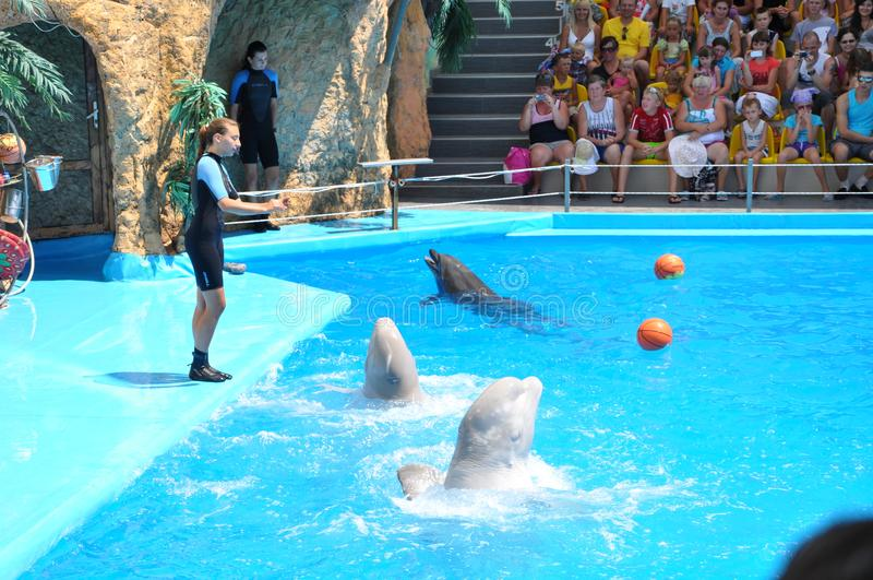 Odessa dolphinarium Nemo holds an unusually wonderful show with dolphins. Clean water of the Black Sea and excellent service. Dolphins are affectionate stock image