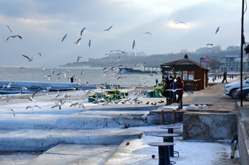 Odessa, inverno, geada - os povos estão alimentando pássaros fotografia de stock royalty free