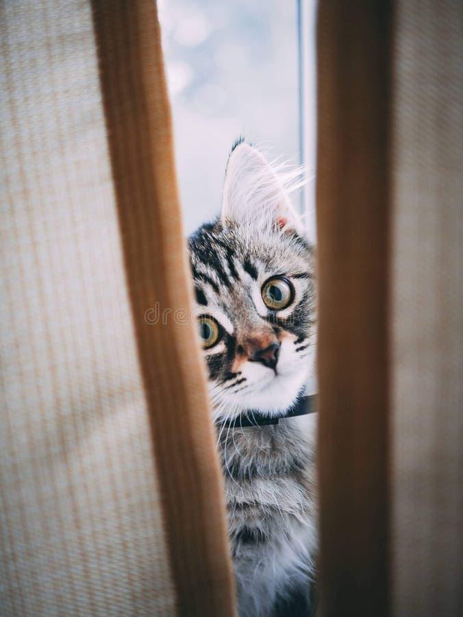 Odgórnego widoku Śmieszny odpoczynkowy kot zdjęcie royalty free