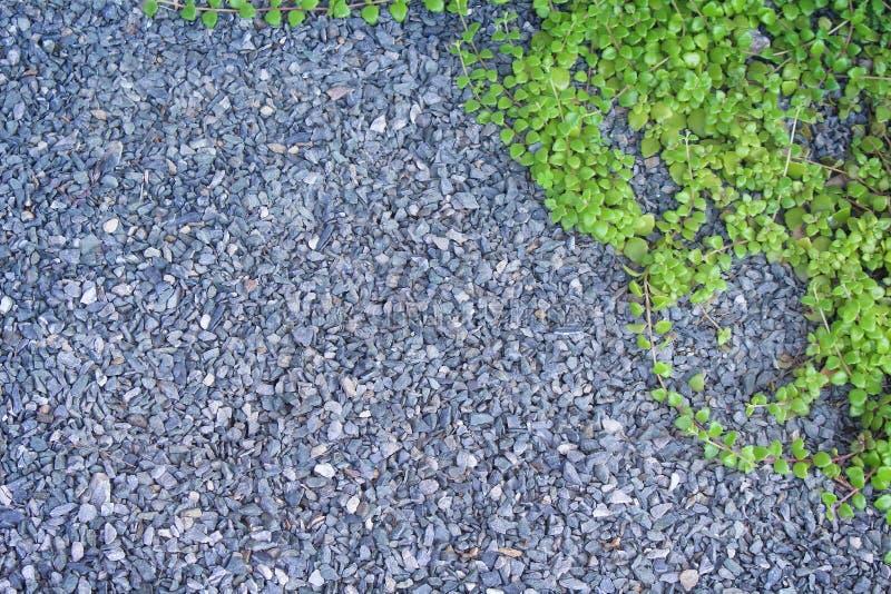 Odgórnego widoku żwiru lub otoczaka mała kamienna tekstura z zielonym bluszczem opuszcza wzory na podłodze i przestrzeni dla teks zdjęcia stock