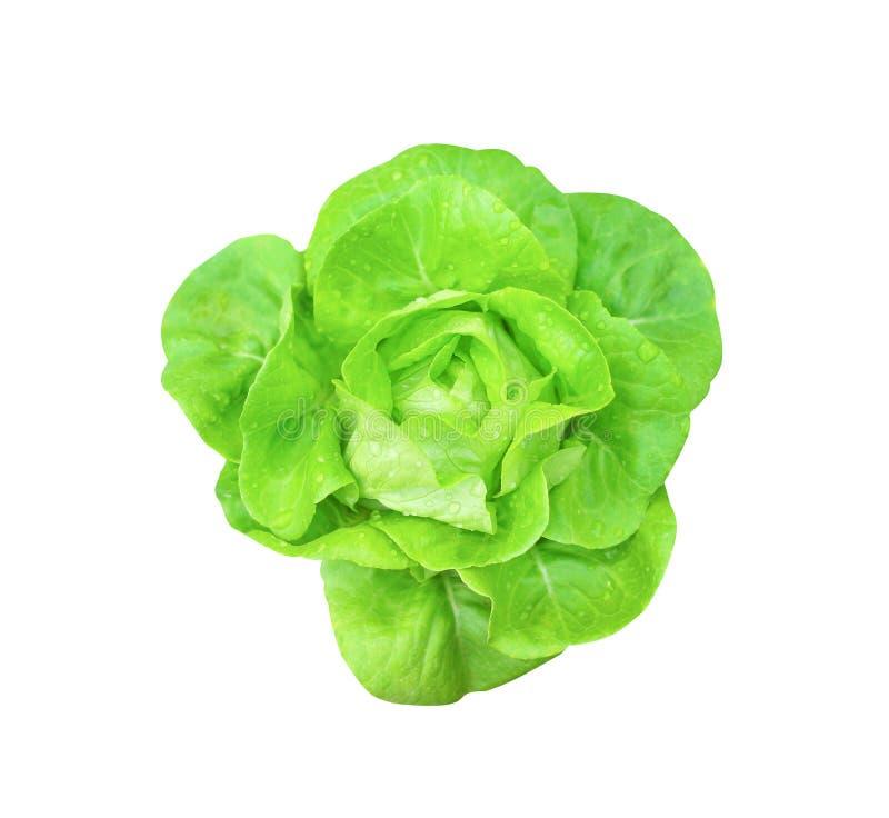 Odgórnego widoku butterhead sałaty świeży zielony organicznie sałatkowy warzywo z wod kroplami odizolowywać na białym tle z ścine zdjęcie royalty free