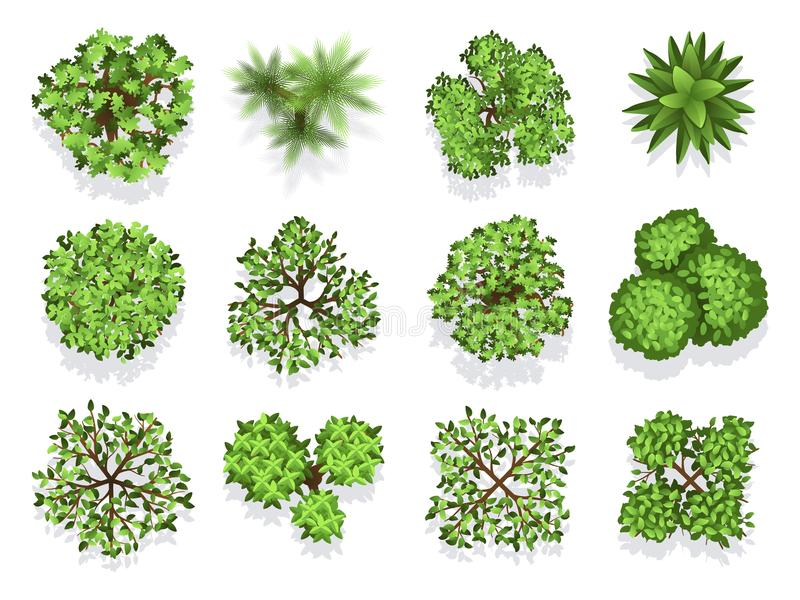 Odgórnego widoku drzewna kolekcja - zielony ulistnienie odizolowywający na białym tle ilustracji