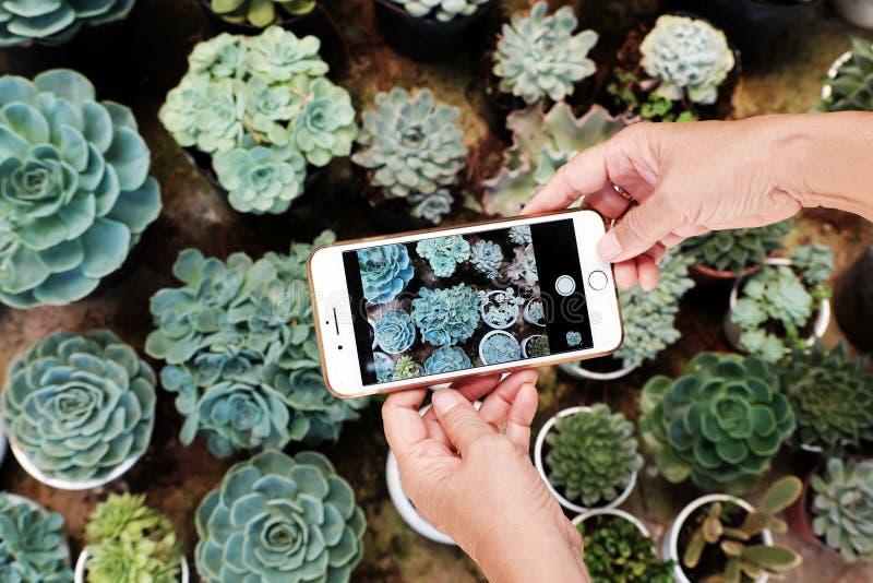 Odgórnego widoku kobiety starsza ręka bierze fotografię smartphone w sukulentu ogródzie obrazy stock