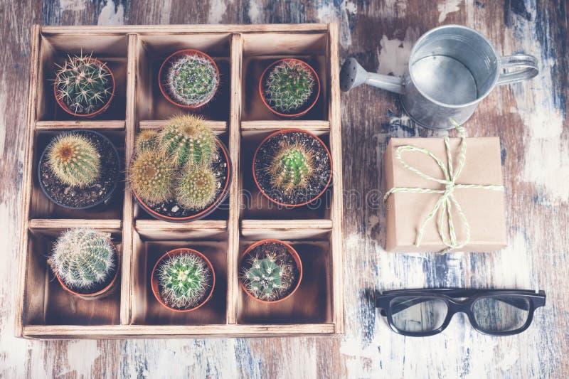 Odgórnego widoku kolekcja kaktusy w drewnianym pudełku Fotografia różnorodni typy kaktusy Wizerunku tonowanie fotografia royalty free