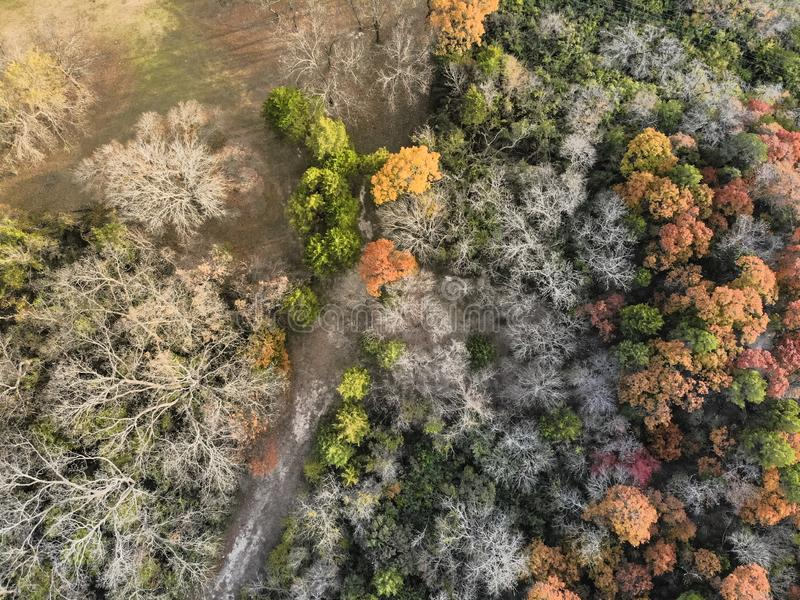 Odgórnego widoku kolorowej jesieni ulistnienia lasowy krajobraz w Dallas od fotografia royalty free