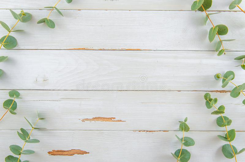 Odgórnego widoku kwiecistego eukaliptusowego mieszkania nieatutowa rama na białym nieociosanym drewnie zdjęcie stock
