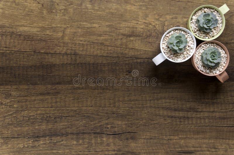 Odgórnego widoku mała roślina w pastelu puszkuje na drewnianym tle fotografia stock