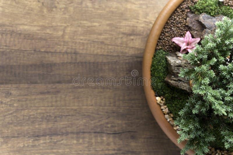 Odgórnego widoku mały ogród w pucharze fotografia royalty free