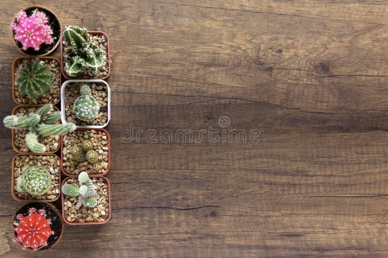 Odgórnego widoku sukulenty w małych flowerpots i kaktus dalej wodden bac obraz stock