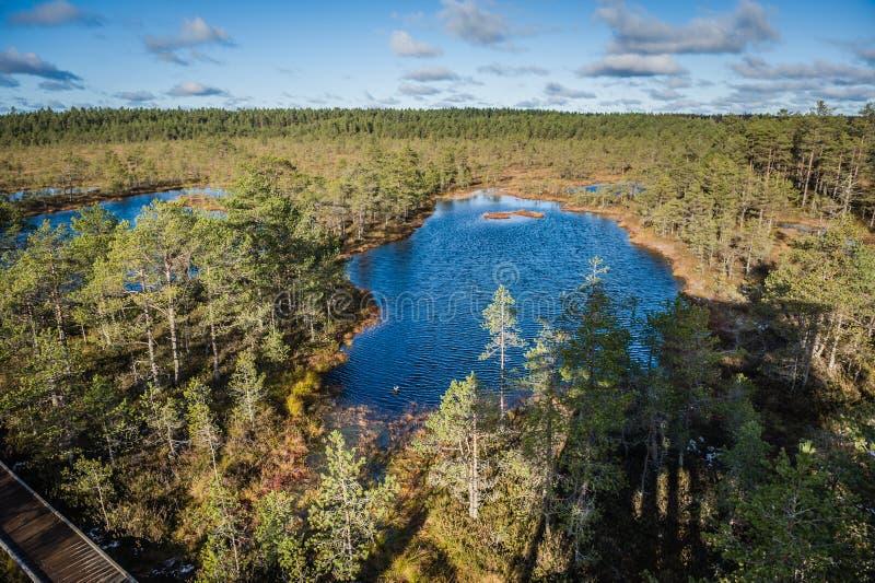 Odgórny widok bagno w Estonia Nastroszeni bagien jeziora w wczesnych wiosnach zdjęcia royalty free