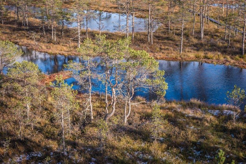 Odgórny widok bagno w Estonia Nastroszeni bagien jeziora z sosną przy przodem fotografia royalty free