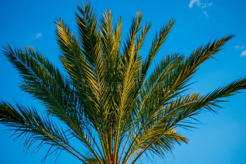 Odg?rny widok drzewko palmowe na lighblue nieba tle w zawody mi?dzynarodowi przeja?d?ki terenie obraz stock