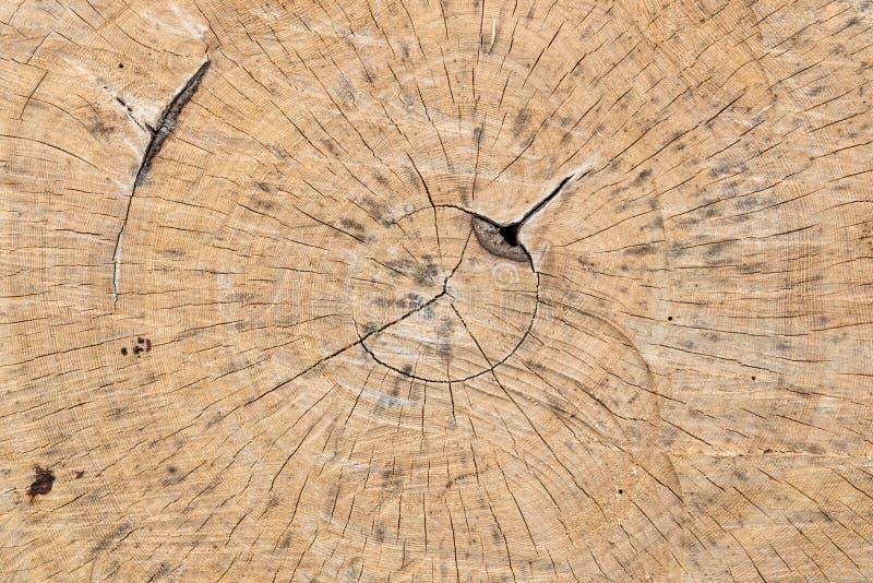 Odgórny widok Drzewnego pierścionku bela zdjęcie stock