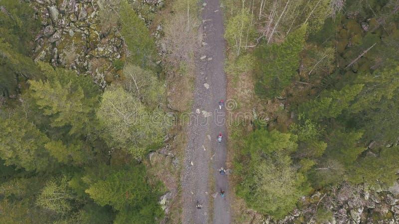 Odgórny widok grupa turyści chodzi wzdłuż lasowego śladu klamerka Grupa turyści iść wierzchołek góra wzdłuż ścieżki zdjęcia royalty free