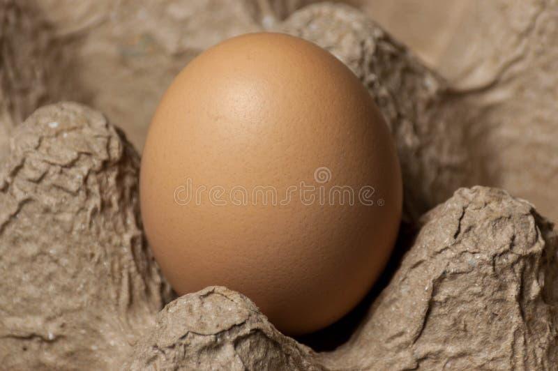 Odgórny widok jajko w jajecznej tacy obraz stock