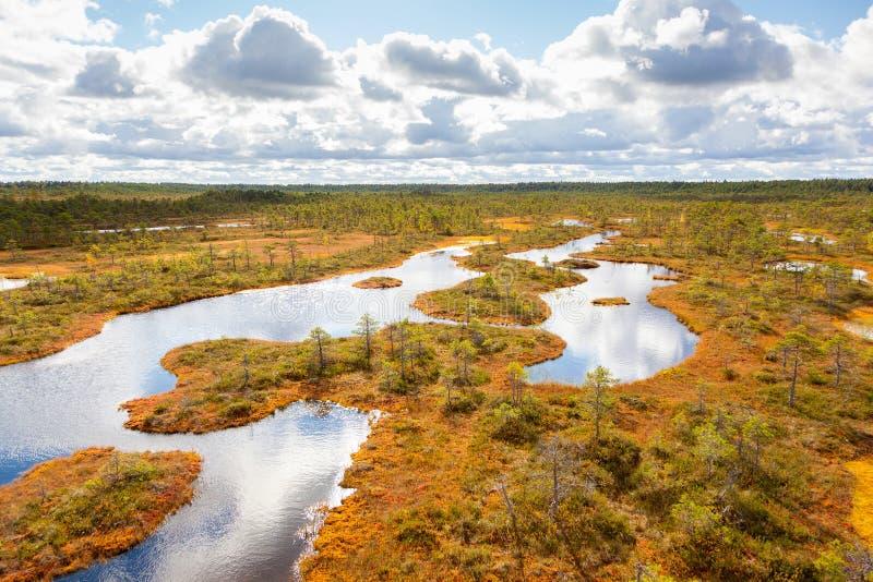 Odgórny widok jesień krajobraz Ogromny bagno w Estonia zdjęcia royalty free