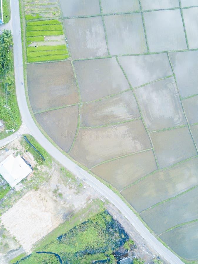 Odgórny widok od trutnia piękni irlandczyków pola z aksamit zieleni potomstwami kiełkuje w thandland zdjęcia royalty free