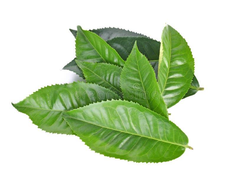 Odgórny widok odizolowywający na białym tle liść zielona herbata zdjęcie royalty free