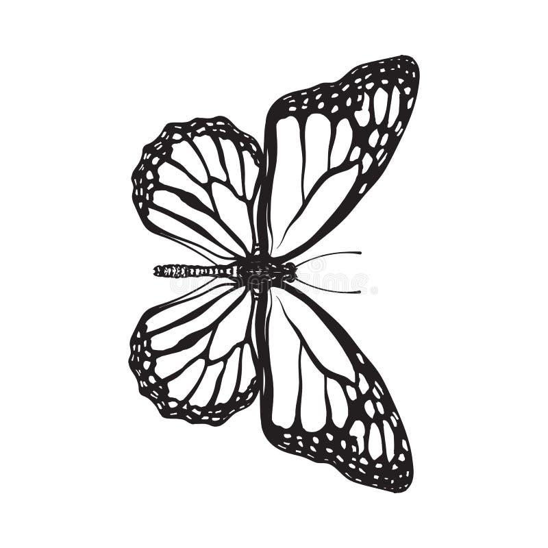 Odgórny widok piękny monarchiczny motyl, odizolowywająca nakreślenie stylu ilustracja ilustracja wektor