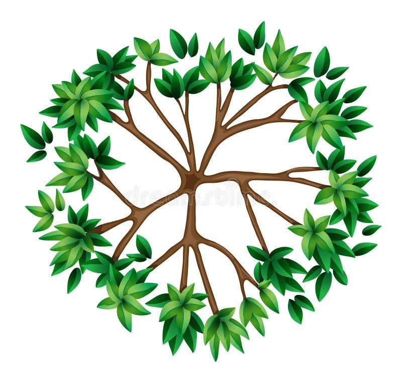 Odgórny widok roślina ilustracja wektor