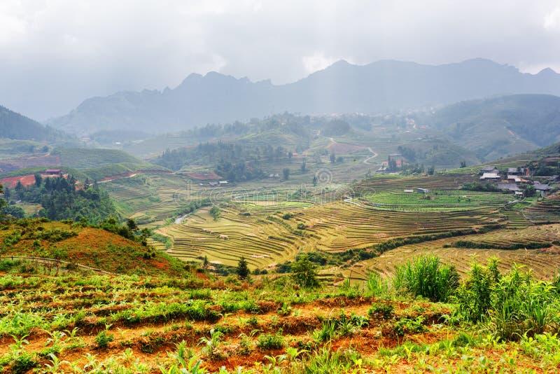 Odgórny widok ryż tarasuje przy średniogórzami Sa Pa, Wietnam zdjęcie royalty free