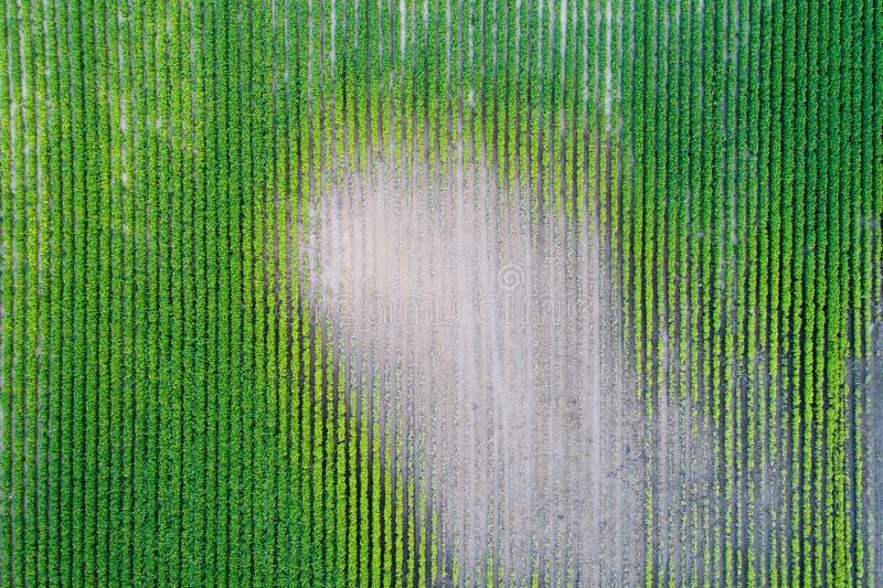 Odgórny widok soi pole podczas suszy zdjęcia royalty free