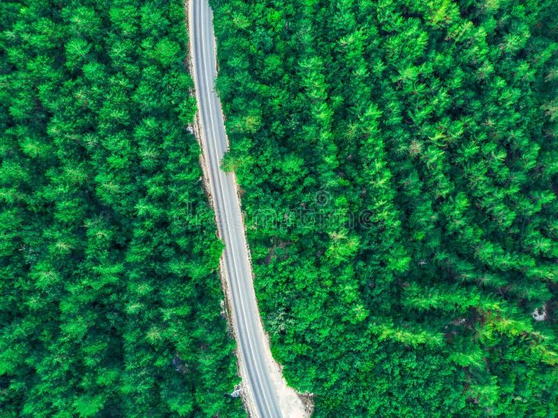 Odgórny widok zielony las i droga w środku crimea zdjęcie stock