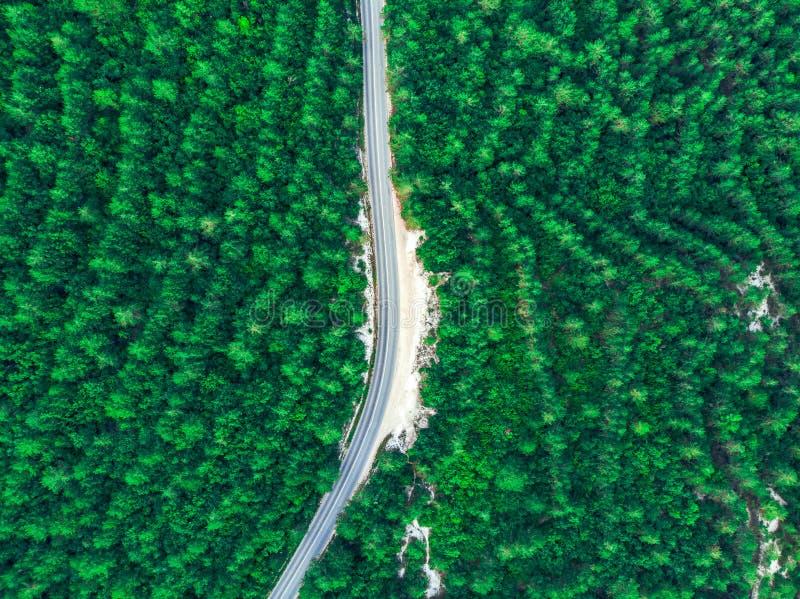 Odgórny widok zielony las i droga w środku crimea zdjęcia royalty free