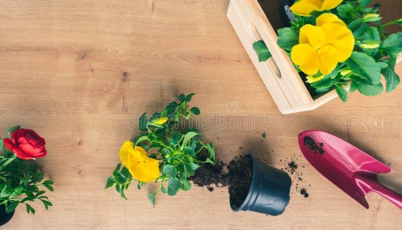 Odg?rny widok kolorowe kwiat rozsady i ogrodnictwa wyposa?enie na drewnianym tle zdjęcia royalty free