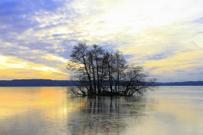 33/5000 Odinokoye derevo na Shvedskom ozere Osamotnionych drzew na Szwedzkim jeziorze zdjęcia royalty free