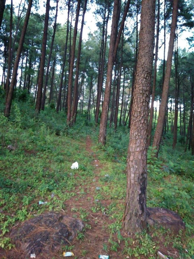 odisha印度和长的树深森林  免版税图库摄影