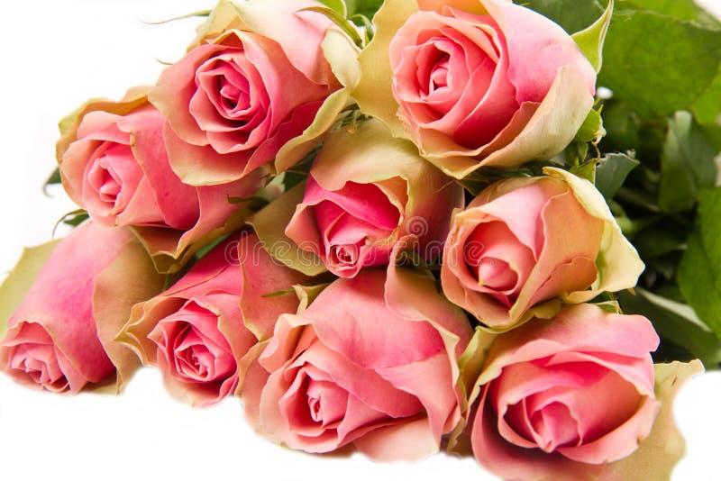 odizolować tło białe różowe róże zdjęcia royalty free