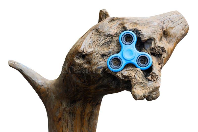 Odizolowywa Błękitnego kądziołka w dudniącym drewnie fotografia stock