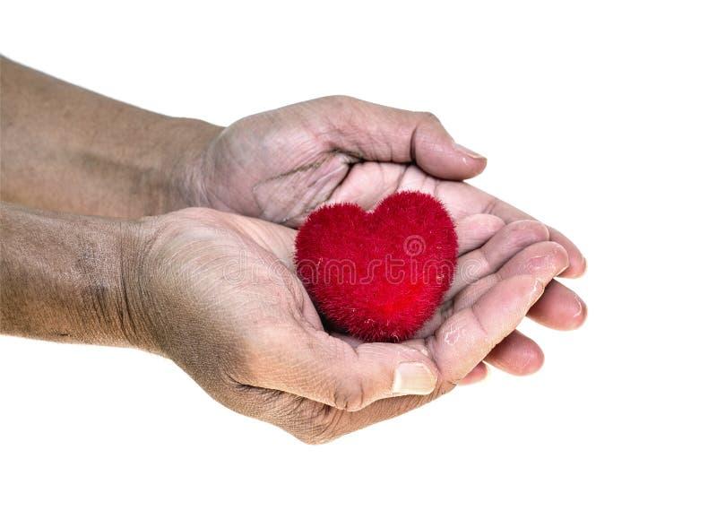 Odizolowywa czerwony serce na brudnych rękach stary człowiek, fotografia royalty free