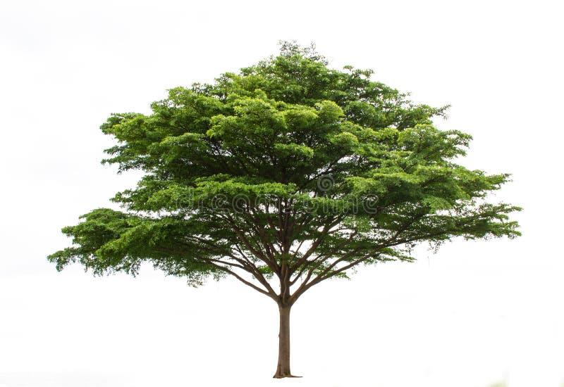 Odizolowywa drzewa obrazy stock