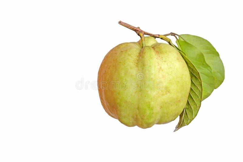 Odizolowywa owoc obraz stock