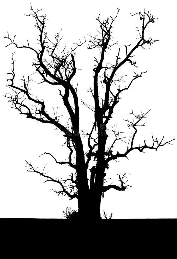 Odizolowywa w drzewo sylwetce. ilustracji