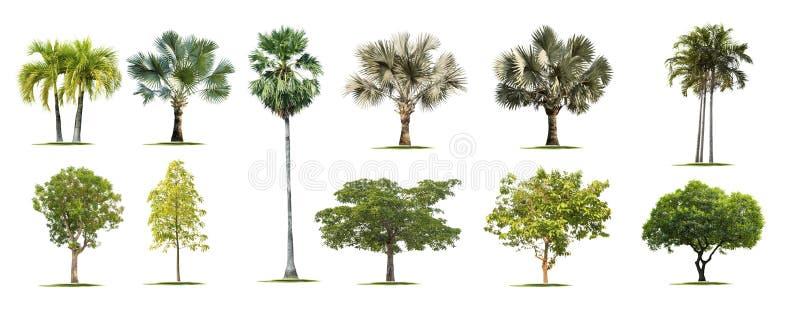 Odizolowywa zielonych drzewa obrazy stock